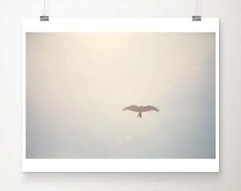 flying bird photograph animal photography flying bird print animal print wings photograph sky photograph flying bird art