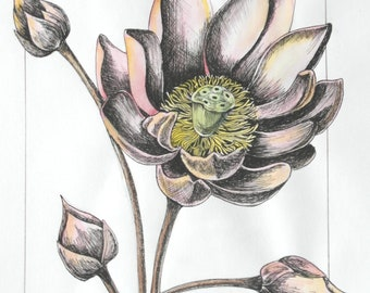 Pen and Ink - Flower and buds