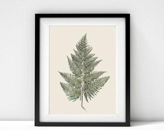 Instant Download, Downloadable, Printable, Botanical, Nature, Fern, Leaf, Print, Art, Photography, Foliage, Australian, Wall Art, Wall Decor