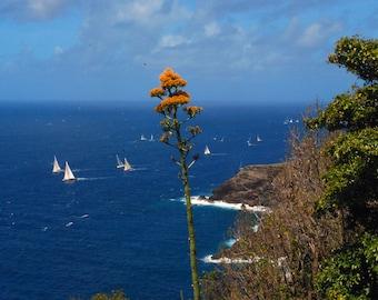 A Daggar Plant on the Island of Antigua in the Caribbean Sea