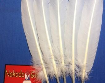 Native American Regalia *Nakoda Made* Replica BALD EAGLE TAIL Feather Fan Set