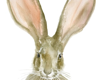 Jack Rabbit Watercolor Reproduction - 4 x 6 - Giclee Fine Art Print - Bunny Painting