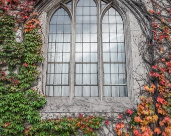 Chicago University Photography,  Ivy on Gothic Building Wall - University of Chicago, Chicago Photography, Gothic, College Decor