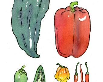 Peppers and flower watercolor with pen & ink botanical style garden kitchen art - illustration print in multiple sizes