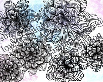 Black And White Line Drawing Flower : Tonal and line drawings katy s