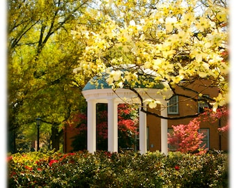 UNC-Chapel Hill Old Well and Dogwood Blossoms