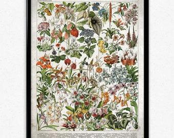 French Flowers Fleurs Vintage Print 2 - Flower Poster - Flower Art - Flower Picture - Home Decor - Home Art - Living Room - Living Room Art