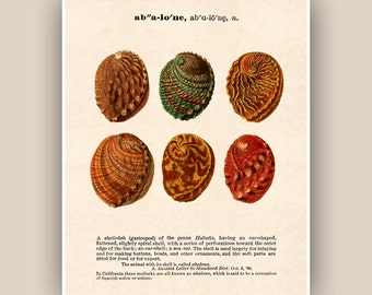 Seashell Print, Vintage abalone image, Dictionary definition text, Sea shell art, Nautical art,  Coastal Living, beach cottage decor, 11x14