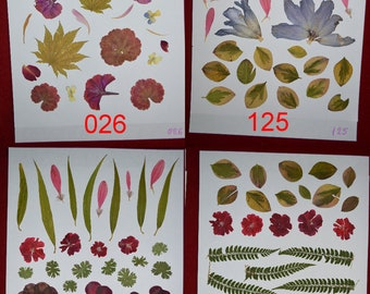 Pressed Flowers, natural crafts, leaves, herbal, nature, rustic, montessori crafts #026, #125, #126, #140