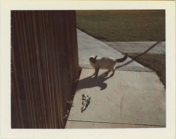 "Vintage Polaroid Land Photo: ""Kimbo, 1975"" [82648]"