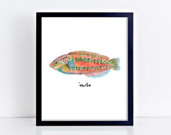 Hawaiian 'Awela Fish Art Print || christmas wrasse, art print, tropical decor, hawaiian art, sea animal, original watercolor painting