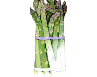 Asparagus - Archival print of my colored pencil drawing