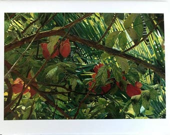 Giclee Print of a watercolor hand painted photo, a Hisbiscus Plant in a jungle of foliage, photo from Key West,Janet Dosenberry
