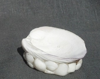 Shell altar bowl, white clam shell bowl