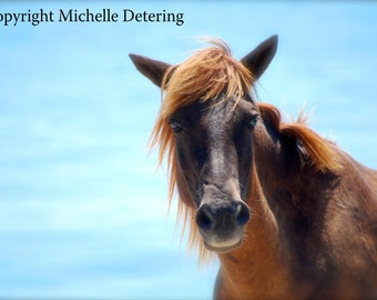 Wild Horse -,Digital Photography,Horse Photography, Wild Horse Art, Horse Decor, Ocean Horse, Blue Horse, Wild Horse Photography, Assateague