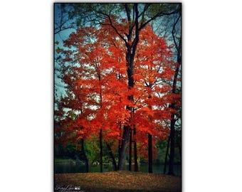Fall Black Framed Wall Art Photography