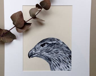 Hawk, Pen and Ink Portrait, Bird Art
