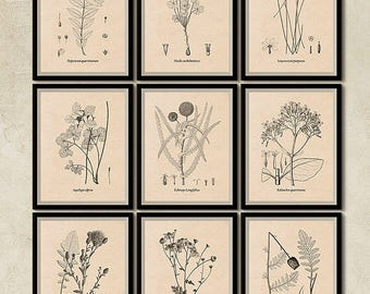 Set of 9 prints, Botanical printable set, Vintage print set, Flower print set, Wall art, Instant download prints, Art print, Flower art, JPG