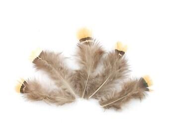 10 x small 7-8cm (76) dark brown pheasant feather
