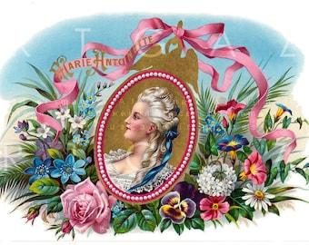 Vintage Cigar Label Marie Antoinette. Stunning Label Cigar Box Vintage Image Digital Download.