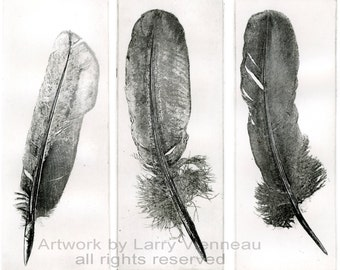 how to clean crow feathers