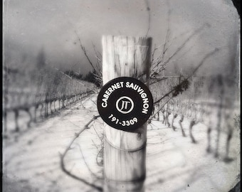 Wine lover vineyard photo, wine photo, black and white, Cabernet winery, home decor, landscape, ontario, niagara, wine country, grapevines
