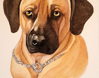 Pet Portraits for Bailey- watercolor painting