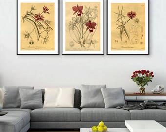 Wall art decor gallery flowers print botanical art botanical illustration SET OF 3 home office decor poster vintage illustrations posters