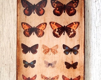 Butterflies Specimens Photo D -Wall Art
