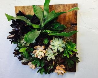 Mounted STAGHORN FERN on finished pine wood encompassed by a colorful variety of SUCCULANTS