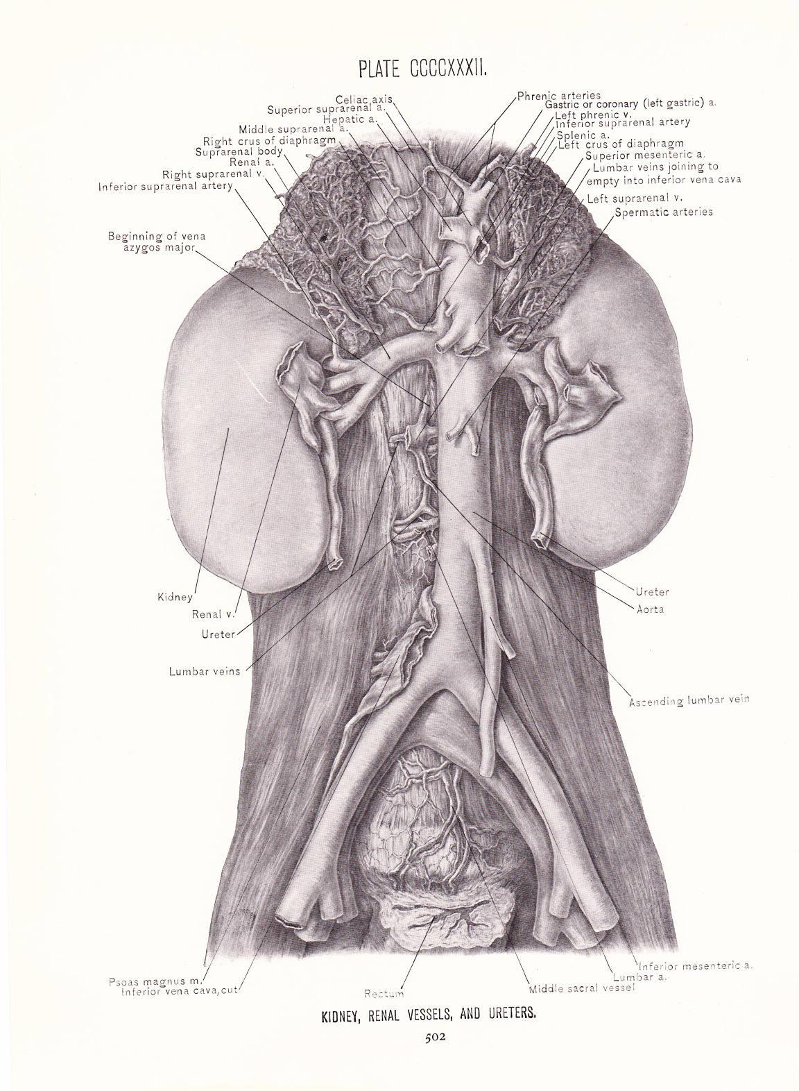 Fantastisch Mesenterica Zeitgenössisch - Anatomie Ideen - finotti.info