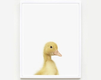 Baby Animal Nursery Art Print. Duckling Little Darling. Animal Wall Art. Animal Nursery Decor. Baby Animal Photo.