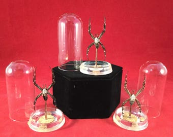 1 LARGE Entomology/taxidermy Garden Spider glass dome display-insect-arachnid