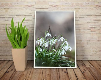 Snowdrops print, white flowers, winter flowers, fine art print, close up photo, nature print, fine art print, wall art, wall print, decor