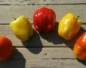 Seeds - Sweet Pepper, Garden Sunshine - 25 ct.