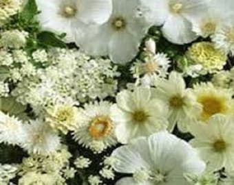 White Shades Of Color Wildflower Flower Seeds / Annual 75+