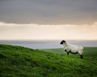 Sheep, Co. Clare, Ireland - fine art photography print