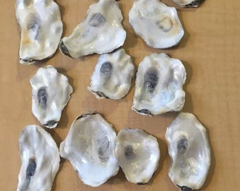 "100 Flat Side Oyster Sea Shells Small Shiny Craft Art wedding Clean No Smell 2-3.4"" inch"