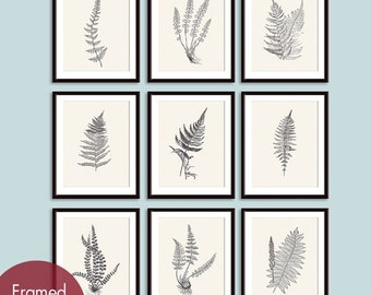 Ferns Garden Botanical Prints (Series E) Set of 9 - Art Prints (Featured in Charcoal and Cream)