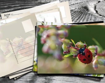 Morning Dew on ladybug - Fine Art Photograph postcards for Postcrossing