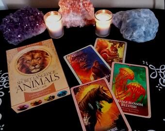 Tarot Reading ~ Three Card Spread