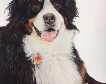 Commissioned Pet Portrait - Pastels 9x12''