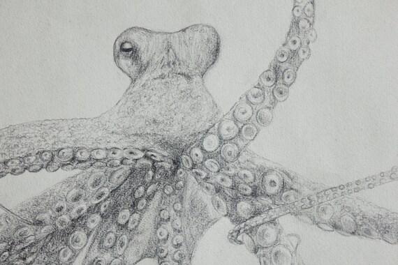Dessin réaliste au crayon pieuvre esquisse graphite recyclé
