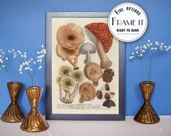 "Vintage illustration of indigo mushrooms - framed fine art print, botanical art, home decor 8""x10"" ; 11""x14"", FREE SHIPPING 14"