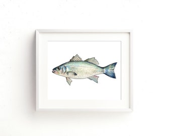 Chilean Sea Bass Watercolor Fine Art Print