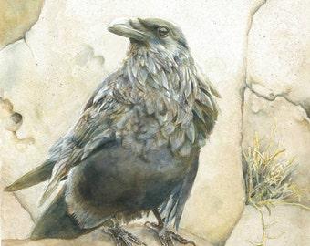 Corvus corax, Common Raven - Giclee Print of Watercolor Original