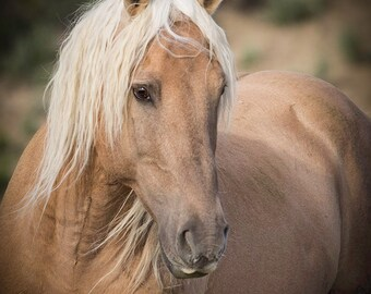 Corona's Summer Portrait -  Fine Art Wild Horse Photograph - Corona - Sand Wash Basin - Fine Art Print