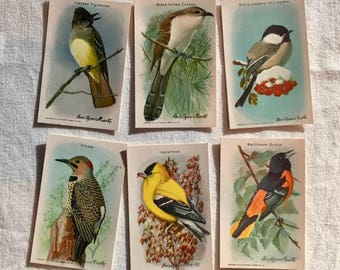 Useful Birds of America collecting cards | Series 10 | complete set | Arm & Hammer| birds | advertising cards