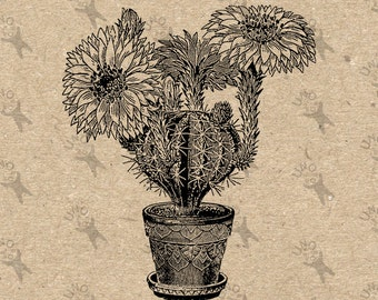 Vintage Image flowering Cactus Instant Download picture Digital printable clipart graphic transfer, burlap, iron on, decor etc HQ 300dpi