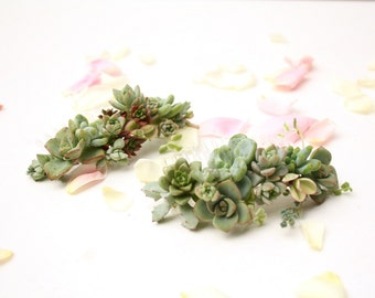 Succulent Botanical Hair Comb